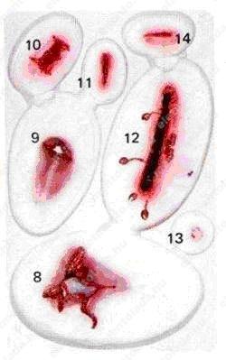 Practoplast sebimitációs készlet (33 seb)